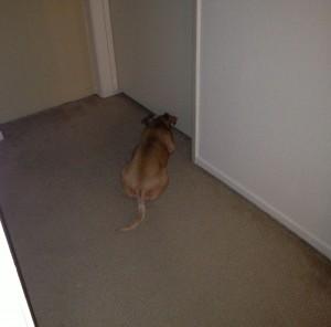 Lucy at Door